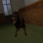 Собака NPC